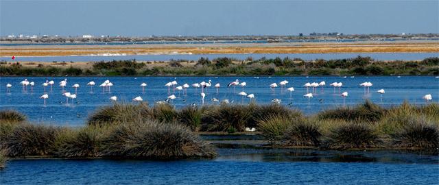 Los planes de Repsol y Gas Natural en Doñana amenazan su ecosistema