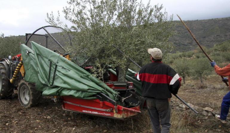 La mala cosecha dispara el negocio del aceite para los agricultores andaluces