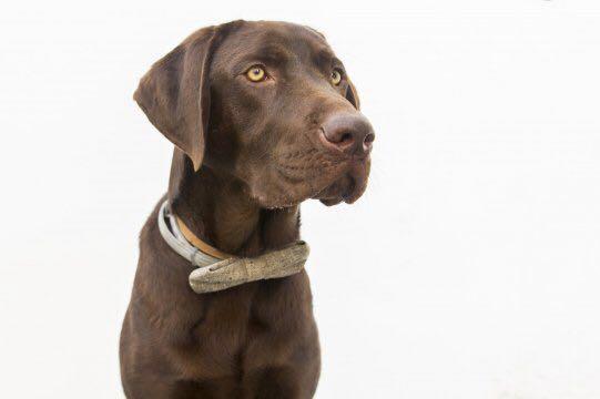 Nanook, el perro labrador que ha salvado una vida en el Puerto de Málaga